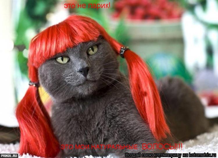 Котоматрица: это не парик! ЭТО МОИ НАТУРАЛЬНЫЕ  ВОЛОСЫ!!!
