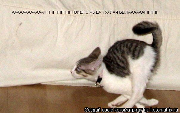 Котоматрица: АААААААААААА!!!!!!!!!!!!!!!!!!!!!! ВИДНО РЫБА ТУХЛАЯ БЫЛАААААА!!!!!!!!!!!