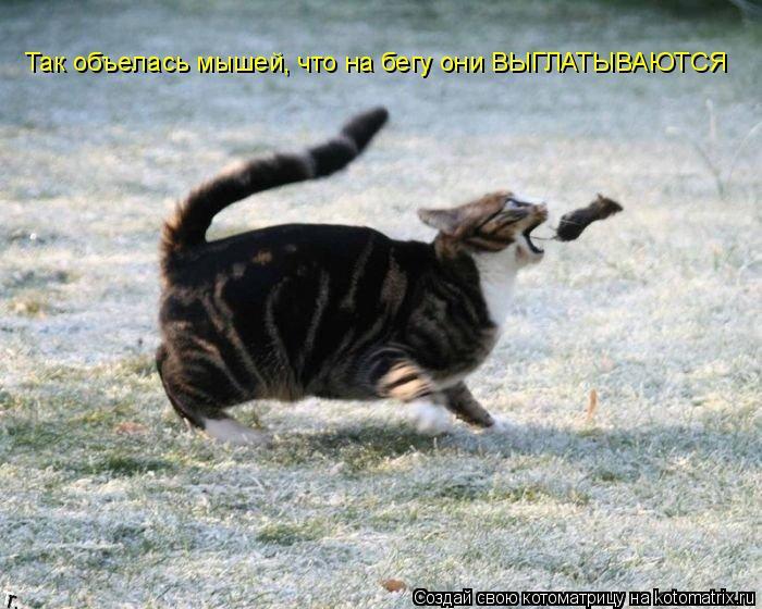Котоматрица: Так объелась мышей, что на бегу они ВЫГЛАТЫВАЮТСЯ