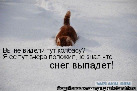 Котоматрица: Вы не видели тут колбасу? Я её тут вчера положил,не знал что снег выпадет!