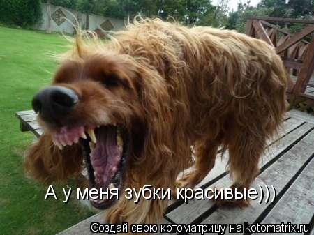 Котоматрица: А у меня зубки красивые)))