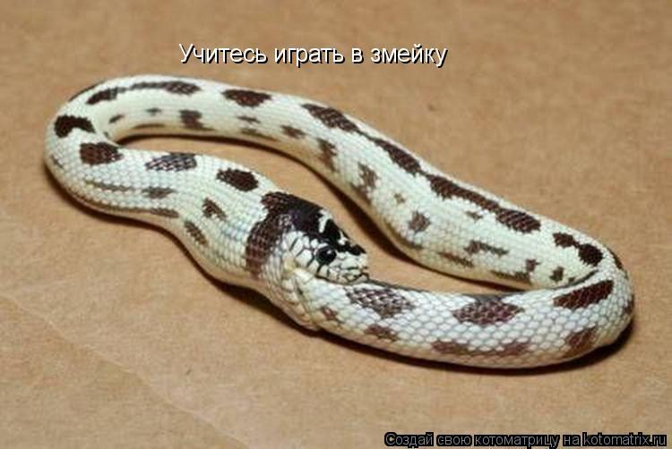 Котоматрица: Учитесь играть в змейку