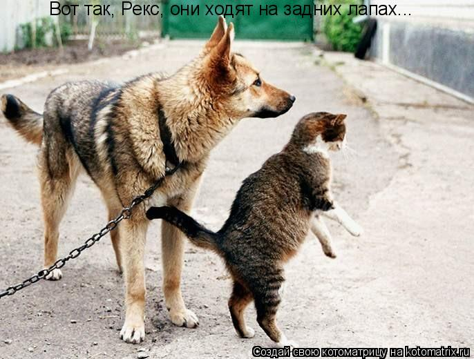 Котоматрица: Вот так, Рекс, они ходят на задних лапах...