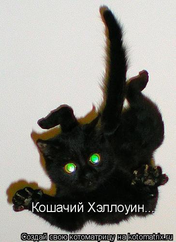 Котоматрица: Кошачий Хэллоуин...
