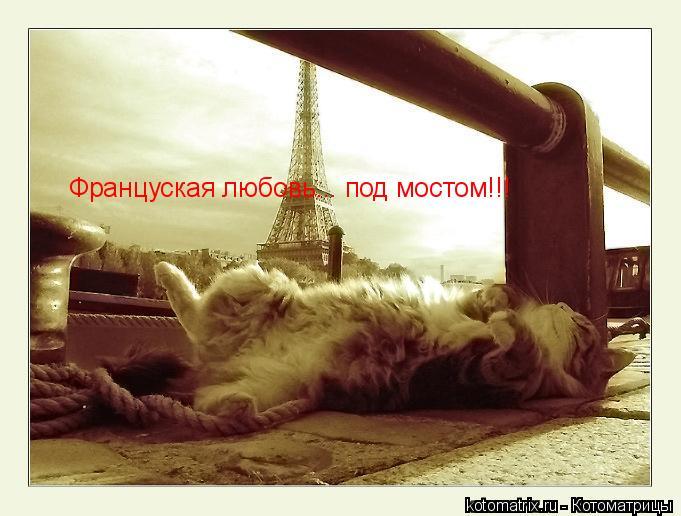 Котоматрица: Француская любовь... под мостом!!!