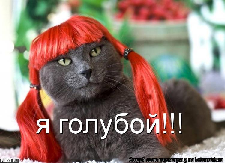 Котоматрица: я голубой!!!