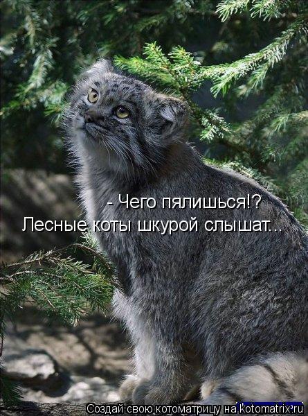 Котоматрица: - Чего пялишься!? Лесные коты шкурой слышат...