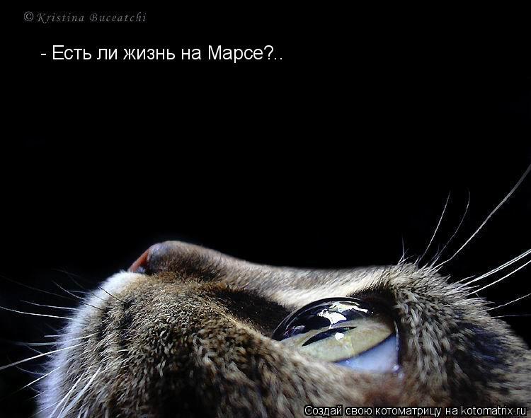 Котоматрица: - Есть ли жизнь на Марсе?..