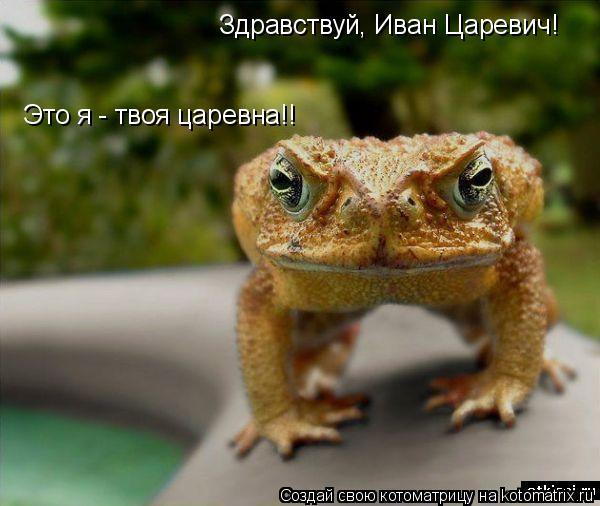 Котоматрица: Здравствуй, Иван Царевич! Это я - твоя царевна!!