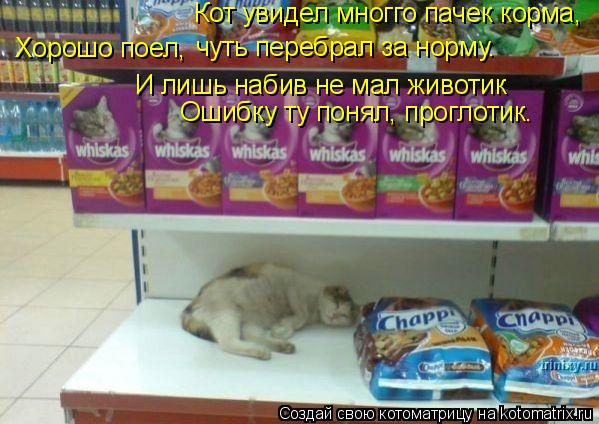 Котоматрица: Кот увидел многго пачек корма, И лишь набив не мал животик Ошибку ту понял, проглотик. Хорошо поел, чуть перебрал за норму.