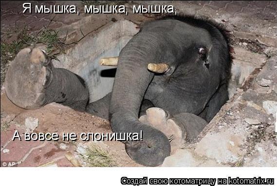 Котоматрица: Я мышка, мышка, мышка, А вовсе не слонишка! А вовсе не слонишка! Я мышка, мышка, мышка,