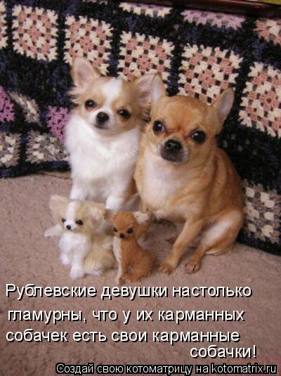 Котоматрица: Рублевские девушки настолько гламурны, что у их карманных собачек есть свои карманные собачки!
