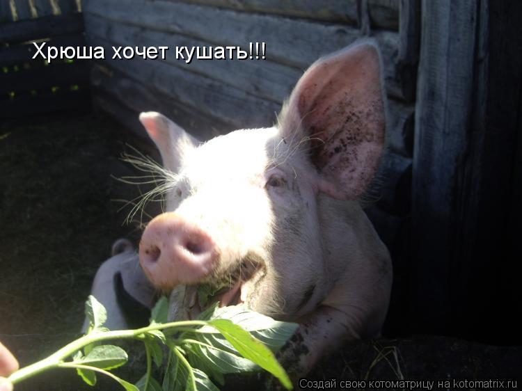 Котоматрица: Хрюша хочет кушать!!!
