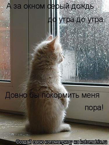 Котоматрица: А за окном серый дождь до утра до утра. Довно бы покормить меня  пора!