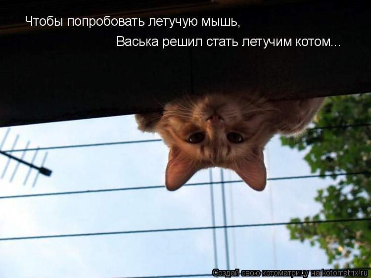Котоматрица: Чтобы попробовать летучую мышь, Васька решил стать летучим котом...