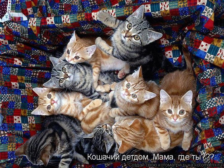 Котоматрица: Кошачий детдом. Мама, где ты???