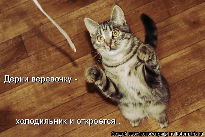Котоматрица: Дерни веревочку - холодильник и откроется...