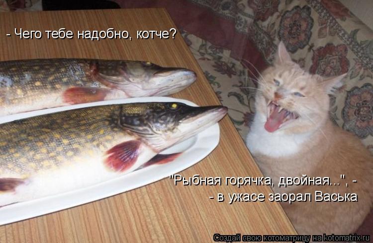 """Котоматрица: - Чего тебе надобно, котче? """"Рыбная горячка, двойная..."""", -  - в ужасе заорал Васька"""