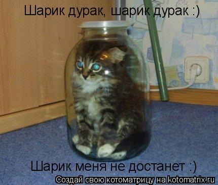 Котоматрица: Шарик дурак, шарик дурак :) Шарик меня не достанет :)