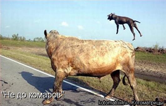 "Котоматрица: ""Не до комаров"""