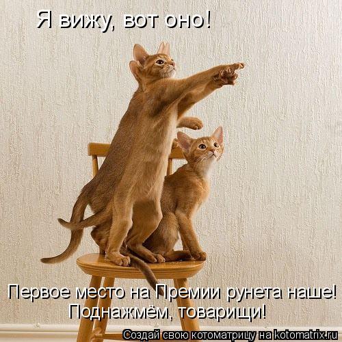 Котоматрица: Я вижу, вот оно! Первое место на Премии рунета наше! Поднажмём, товарищи!