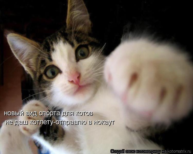 Котоматрица: новый вид спорта для котов не даш котлету-отправлю в нокаут