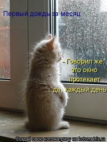 Котоматрица: это окно  протекает - Говорил же: ... да, каждый день Первый дождь за месяц