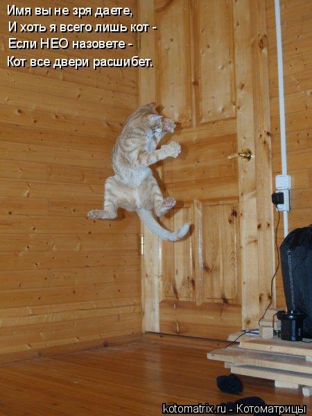Котоматрица: Имя вы не зря даете, И хоть я всего лишь кот - Если НЕО назовете -  Кот все двери расшибет.