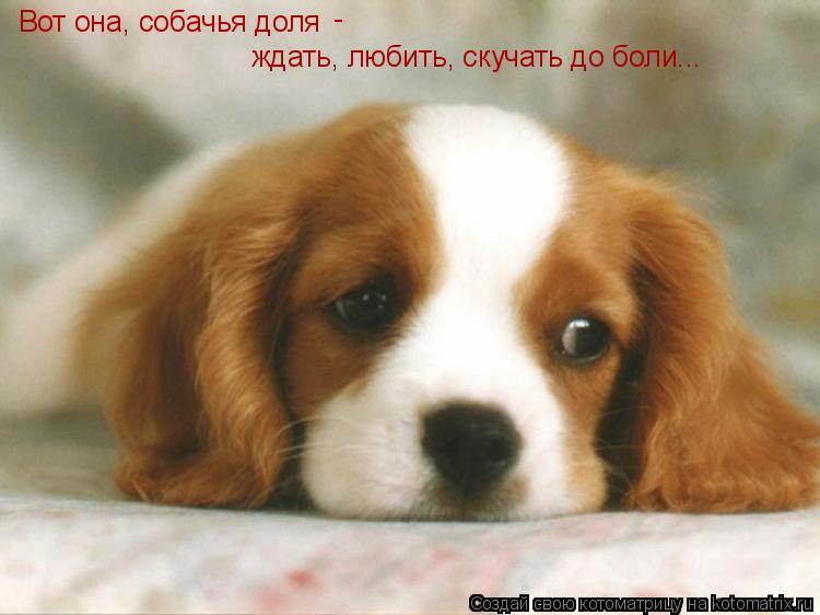 Котоматрица: Вот она, собачья доля ждать, любить, скучать до боли... -