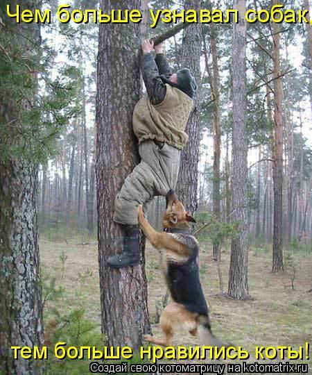 Котоматрица: Чем больше узнавал собак, тем больше нравились коты!