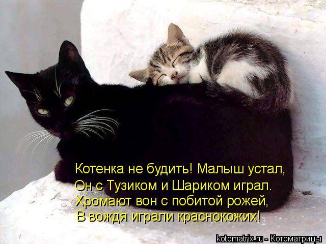 Котоматрица: Хромают вон с побитой рожей, Он с Тузиком и Шариком играл. Котенка не будить! Малыш устал, В вождя играли краснокожих!