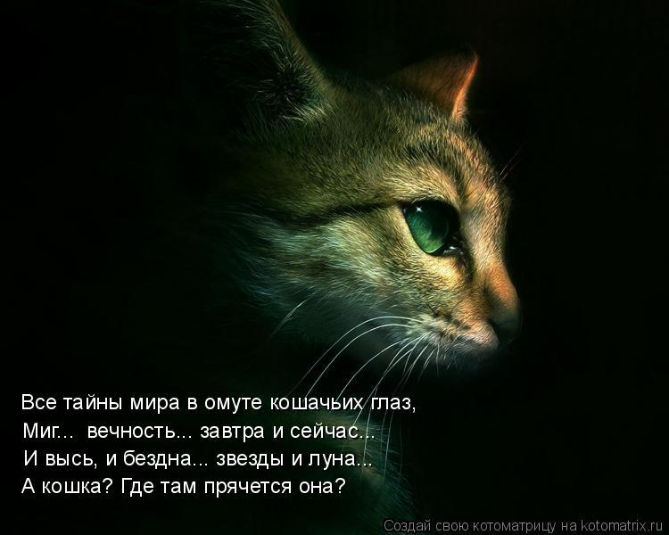 Котоматрица: Миг...  вечность... завтра и сейчас... И высь, и бездна... звезды и луна... А кошка? Где там прячется она? Все тайны мира в омуте кошачьих глаз,