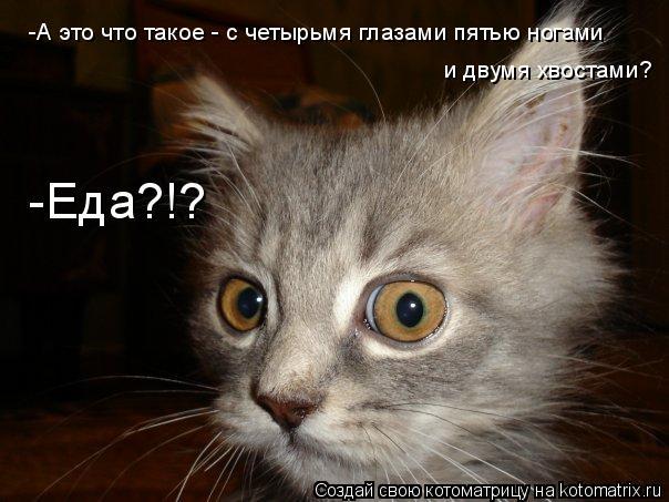 Котоматрица: -А это что такое - с четырьмя глазами пятью ногами и двумя хвостами? -Еда?!?