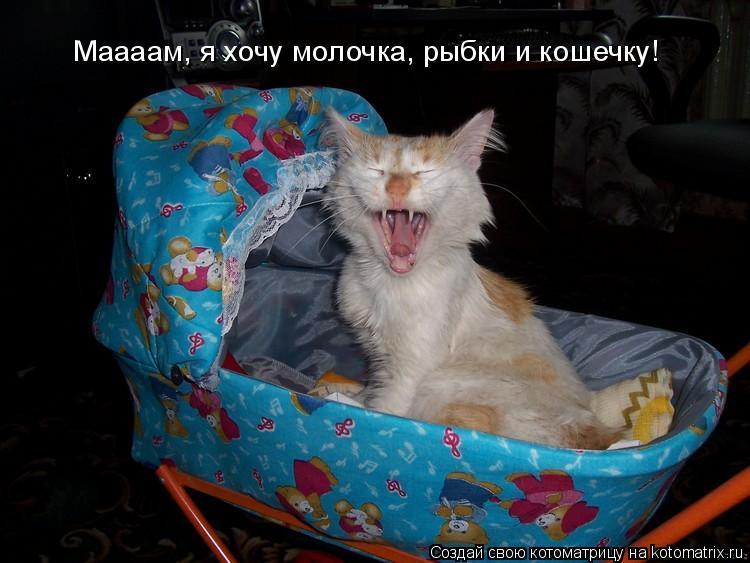 Котоматрица: Маааам, я хочу молочка, рыбки и кошечку!