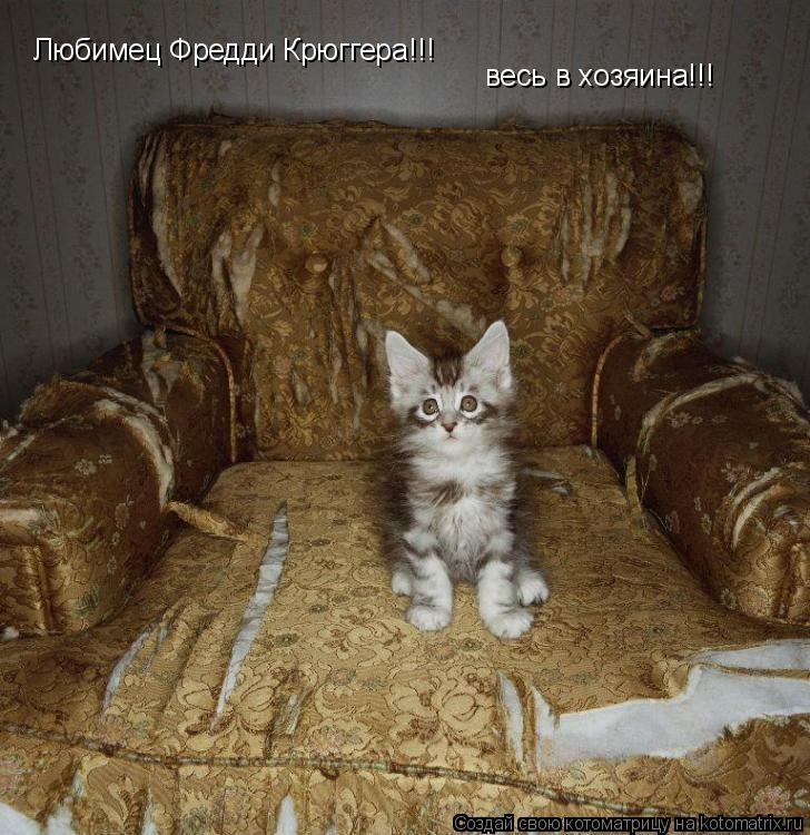 Котоматрица: весь в хозяина!!! Любимец Фредди Крюггера!!!