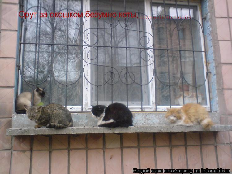 Котоматрица: Орут за окошком безумно коты,,,,,,,,,,,,,,,,,,,,,,,,
