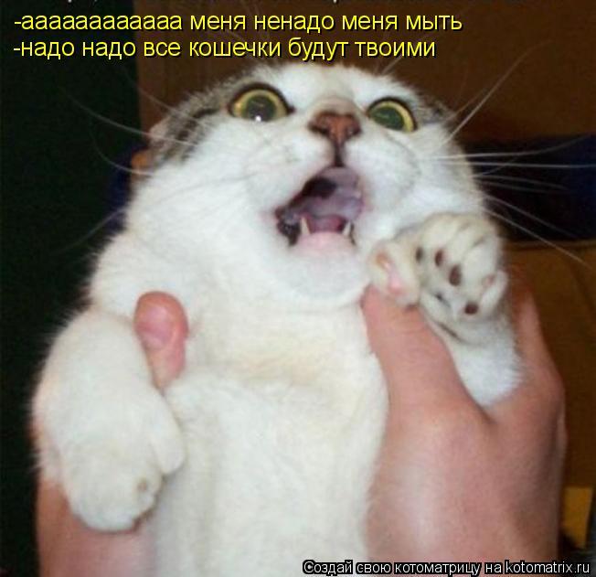 Котоматрица: -аааааааааааа меня ненадо меня мыть -аааааааааааа меня ненадо меня мыть  -надо надо все кошечки будут твоими