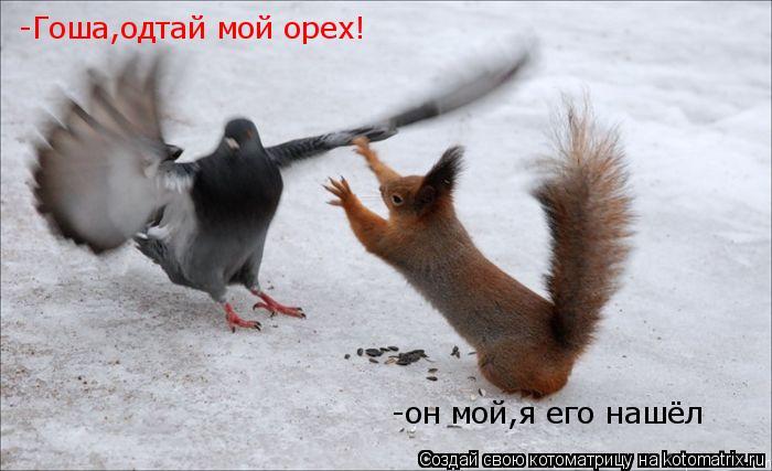 Котоматрица: -Гоша,одтай мой орех! -Гоша,одтай мой орех! -он мой,я его нашёл