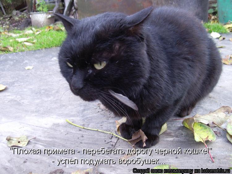 """Котоматрица: """"Плохая примета - перебегать дорогу черной кошке!"""" - успел подумать воробушек..."""