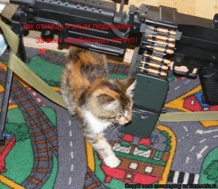 Котоматрица: Так отомщу я злым людишкам За всех загубленных котят!!!