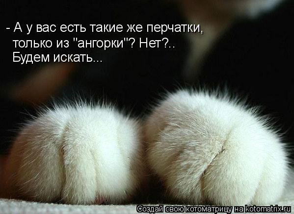 """Котоматрица: - А у вас есть такие же перчатки, только из """"ангорки""""? Нет?.. Будем искать..."""