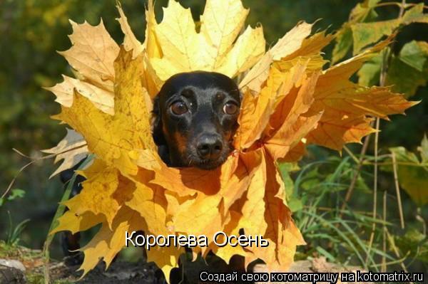 Котоматрица: Королева Осень