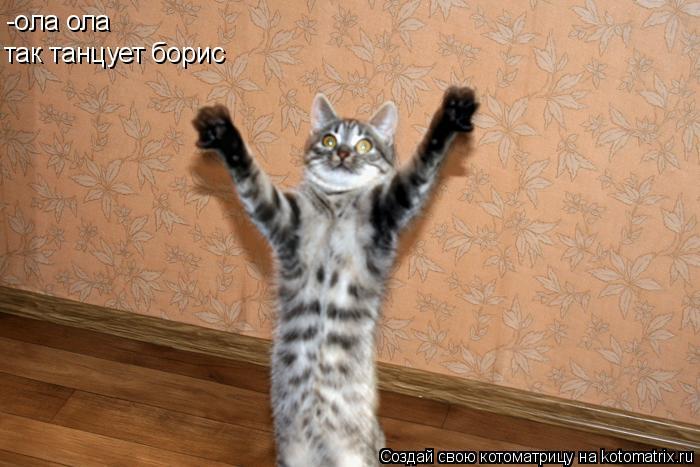 Котоматрица: -ола ола  так танцует борис