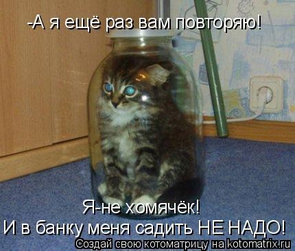 Котоматрица: Я-не хомячёк!  И в банку меня садить НЕ НАДО! -А я ещё раз вам повторяю!
