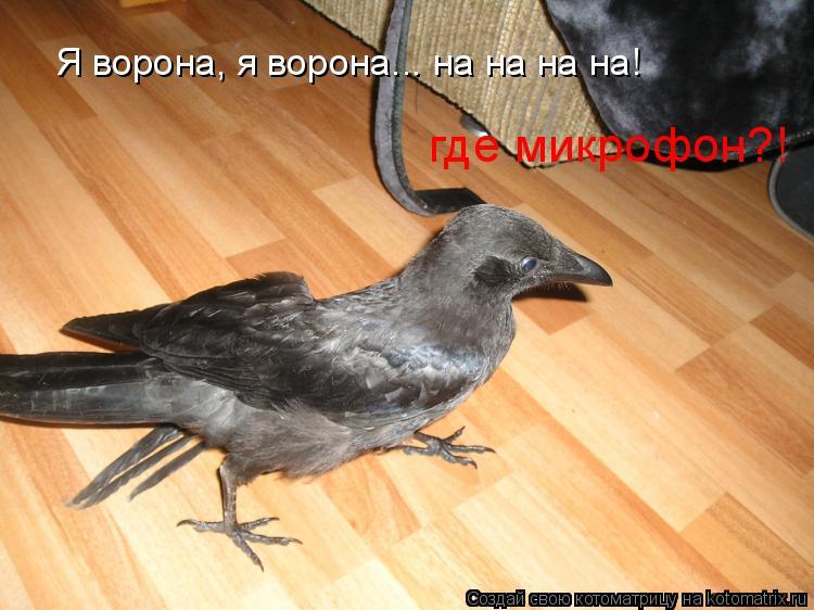 Котоматрица: Я ворона, я ворона... на на на на! где микрофон?!