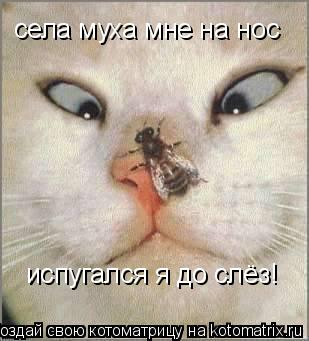 Котоматрица: села муха мне на нос испугался я до слёз!