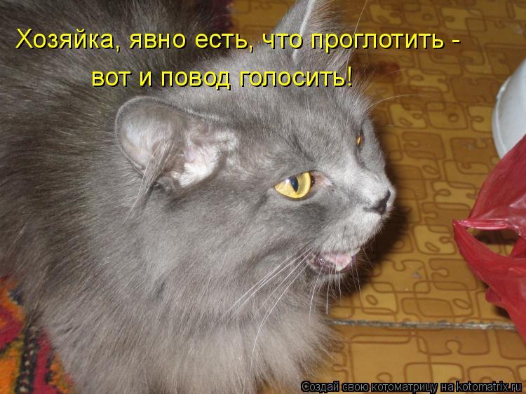 Котоматрица: Хозяйка, явно есть, что проглотить - вот и повод голосить!