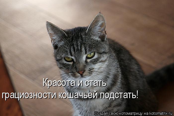 Котоматрица: Красота и стать  грациозности кошачьей подстать!