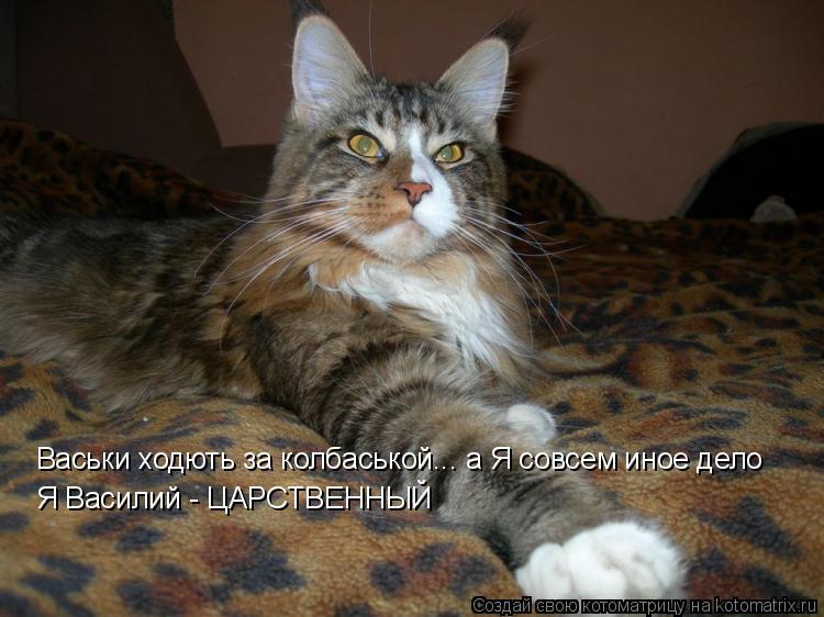 Котоматрица: Я Василий - ЦАРСТВЕННЫЙ Васьки ходють за колбаськой... а Я совсем иное дело