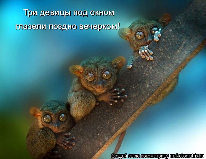 Котоматрица: Три девицы под окном глазели поздно вечерком!
